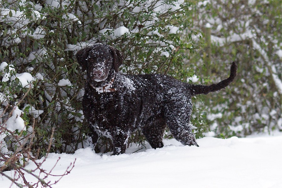 loa-i-sneen_1_301110