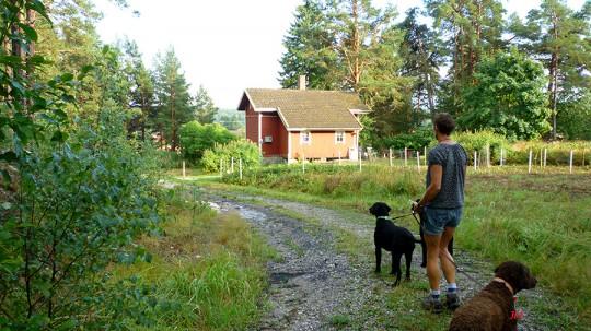20140802_cabin