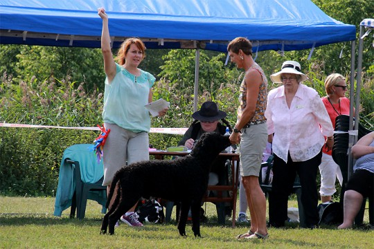 Todo, exc. 2V in Working dog class
