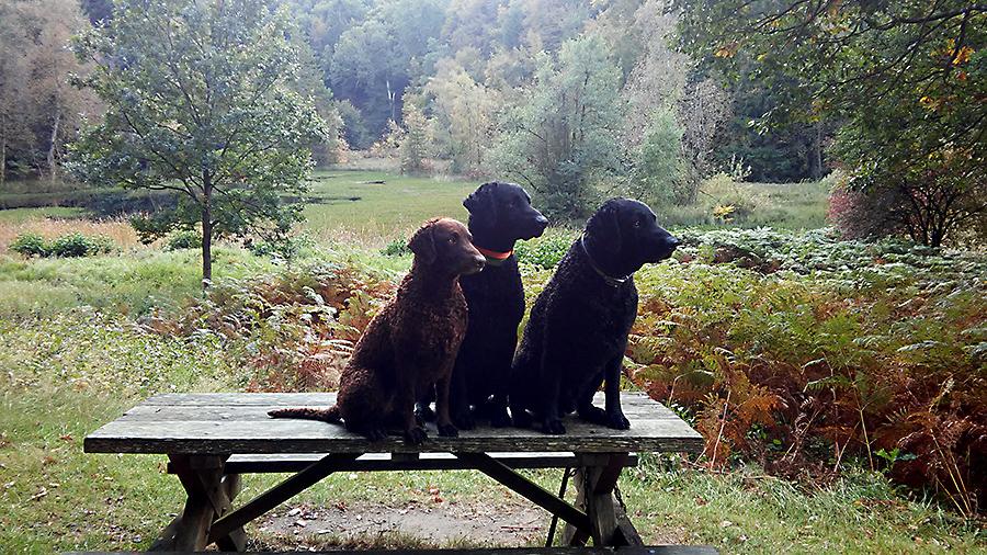 hundene foran Græssøen
